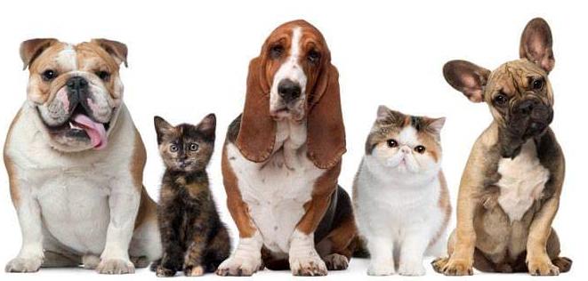 Pet Urine Treatment